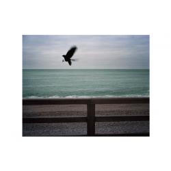 "Photography ""L'oiseau"""